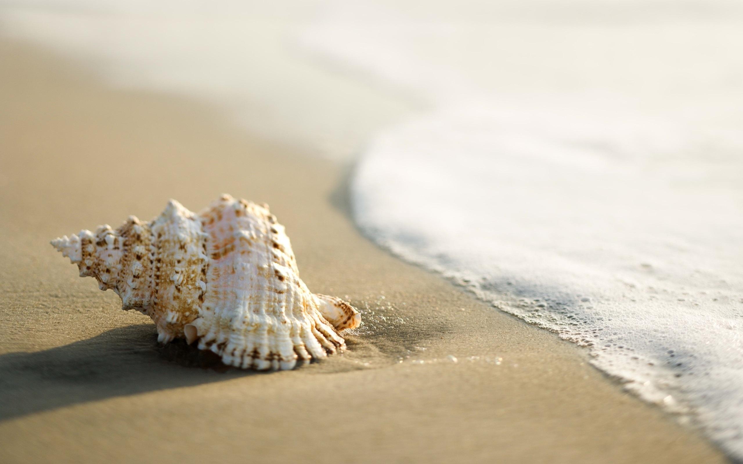 Beach-Ocean-Sand-Sea-Shell-sunny-day